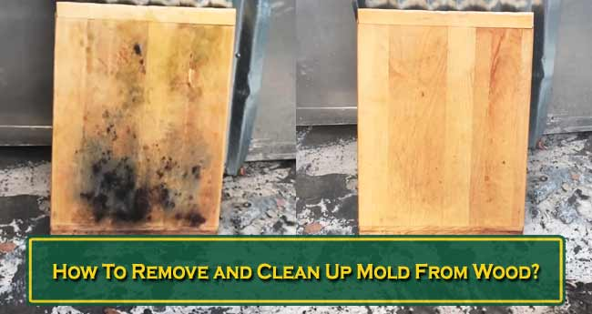How To Remove and Clean Up Mold From Wood