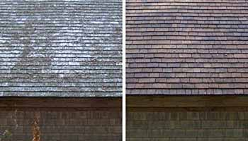 Cedar Siding Cleaner Buying Guide